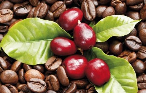 Xu hướng giảm giá vẫn tiếp diễn trên thị trường cà phê
